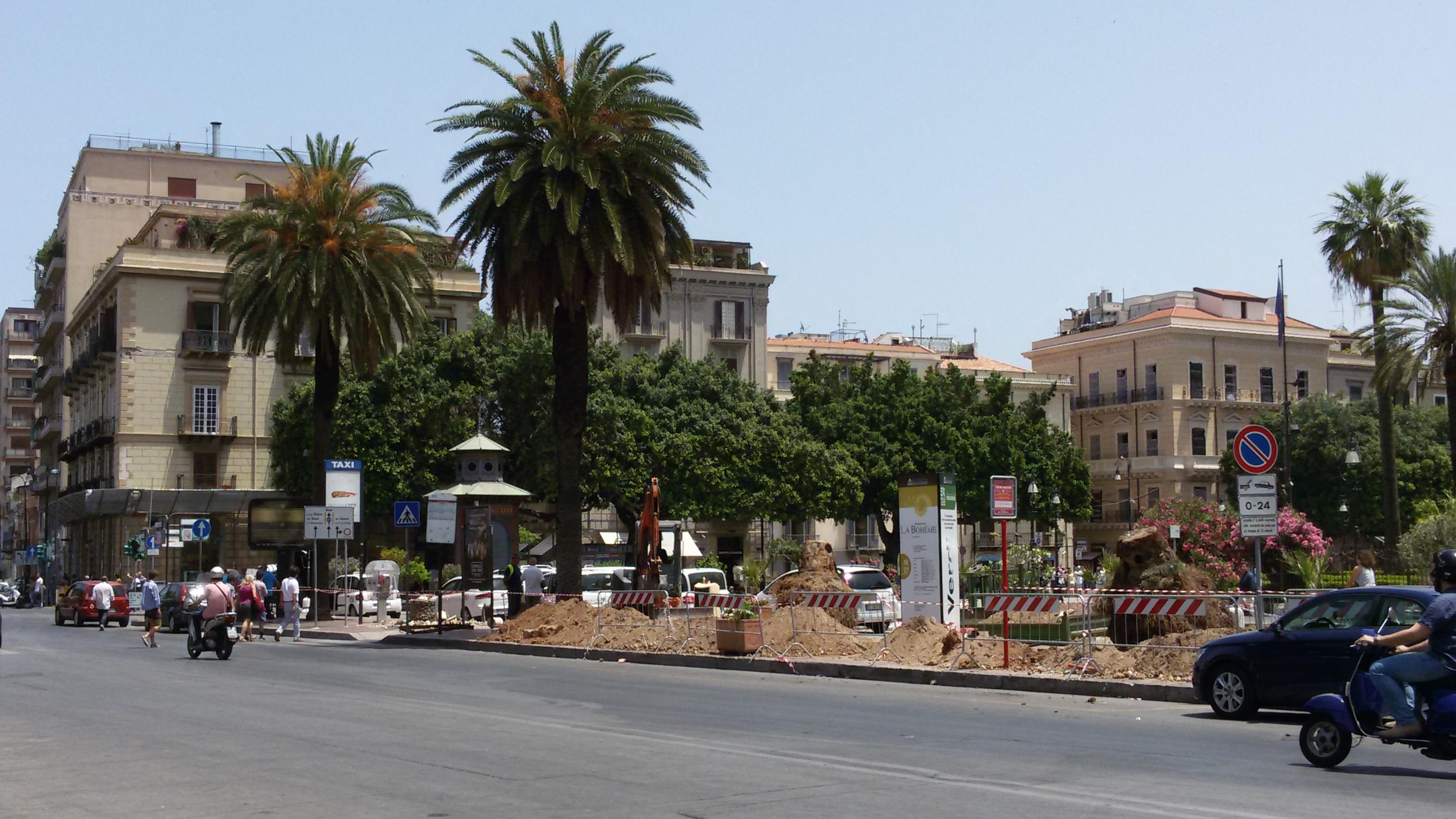 Arrivano le nuove palme a piazza verdi mobilita palermo for Mobilita palermo